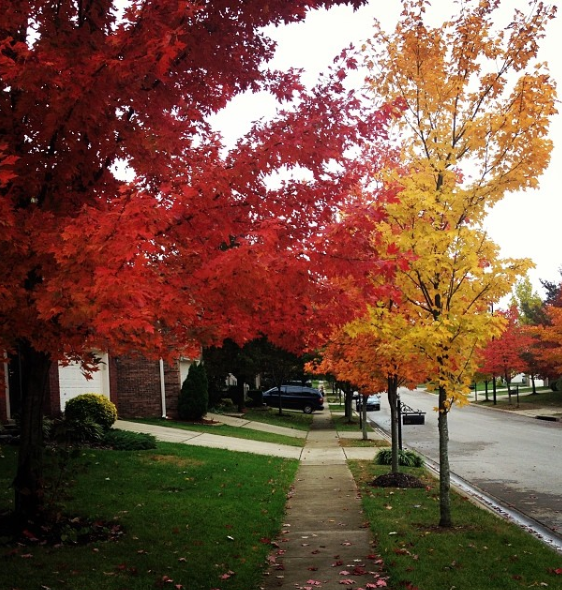 Leaves are beginning to take on the red and orange colors as we head into the Fall season.