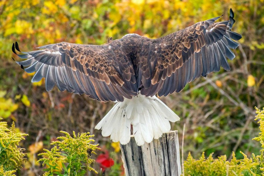 Egg Watchers: Wildlife in Real Time