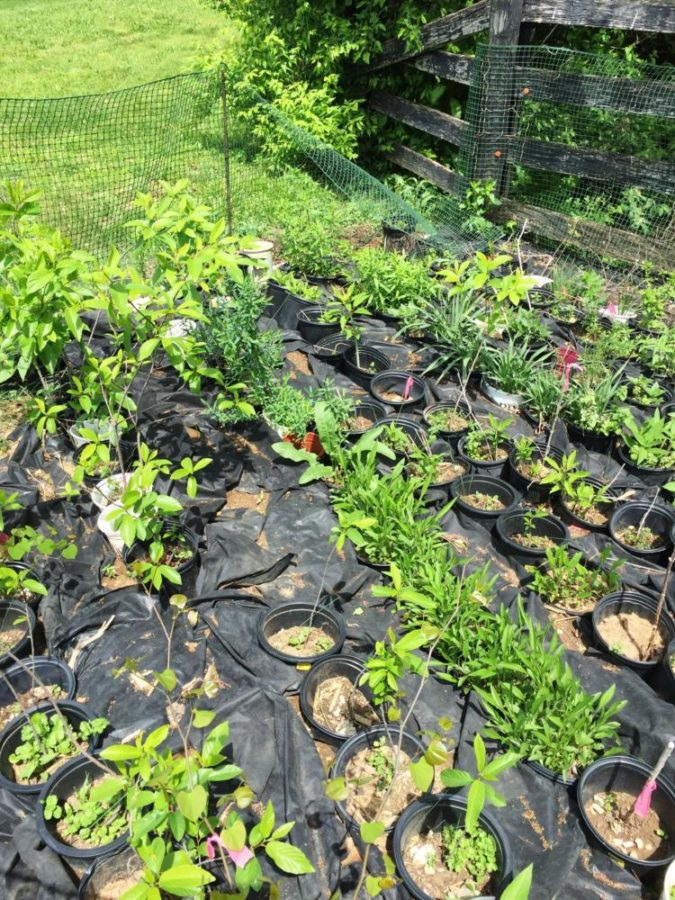 Dunbar's Memorial Garden's Annual Plant Sale