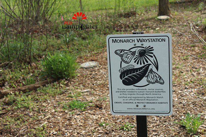 This sign displays the importance of the garden as a Monarch Wayside and may soon be accompanied by a sign dedicated to the preservation of the endangered Bumblebee.