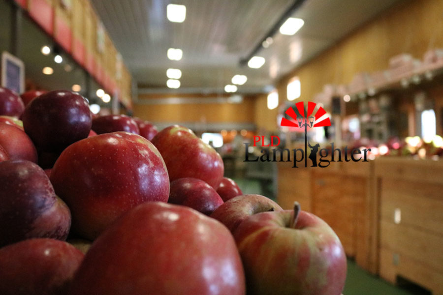 Recently picked apples for sale from the orchard.