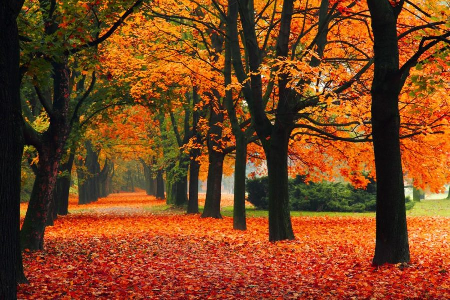 It's Time to Fall in Love with Fall
