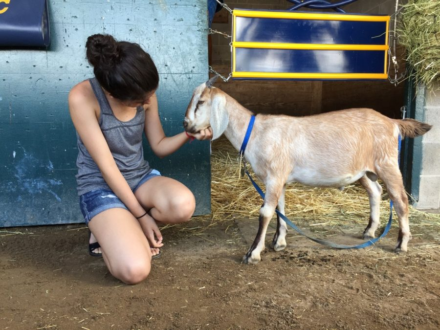 Horse and Goat: An Unlikely Friendship