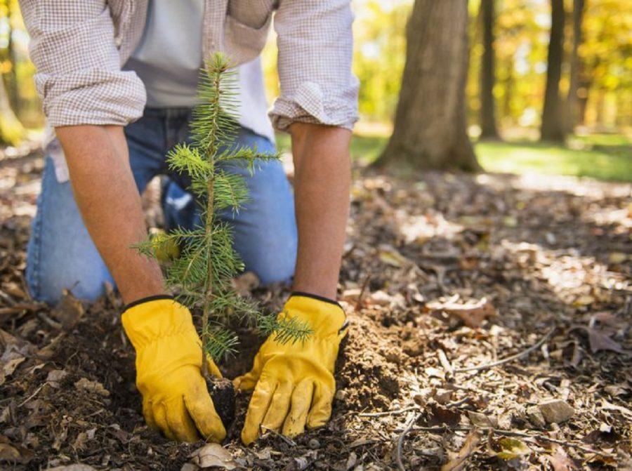 Arbor Day is a national holiday where people are encouraged to plant trees.