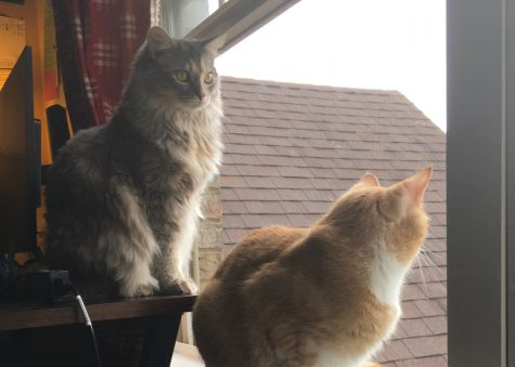 Minnow and Nova stare out the window, stuck inside like the rest of my family.