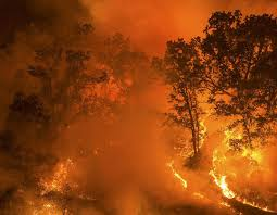 Wildfires in California During 2020
