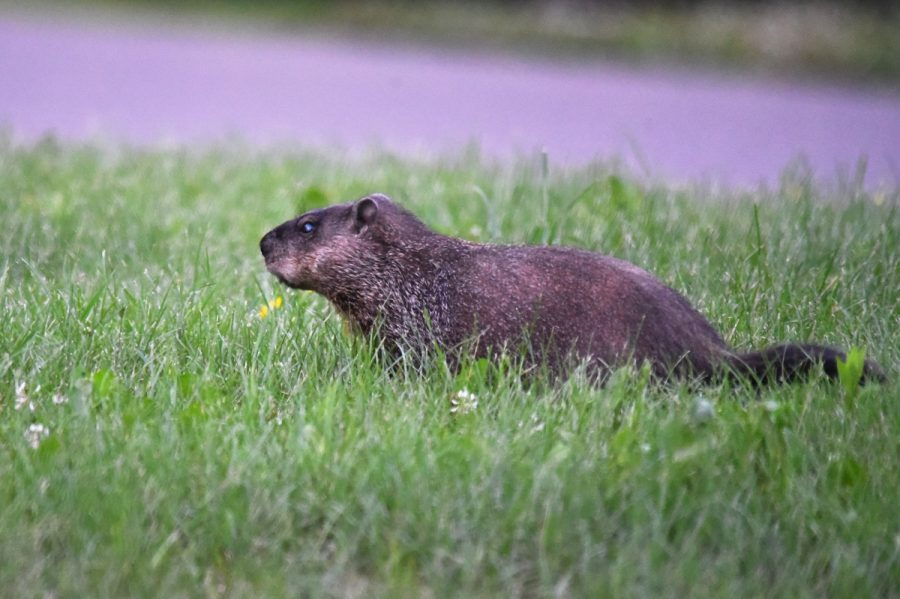 Groundhog Day: Historical Holiday or a Pointless Event?