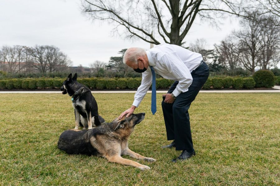 President Joe Biden greets his dogs Champ and Major in the Rose Garden of the White House.