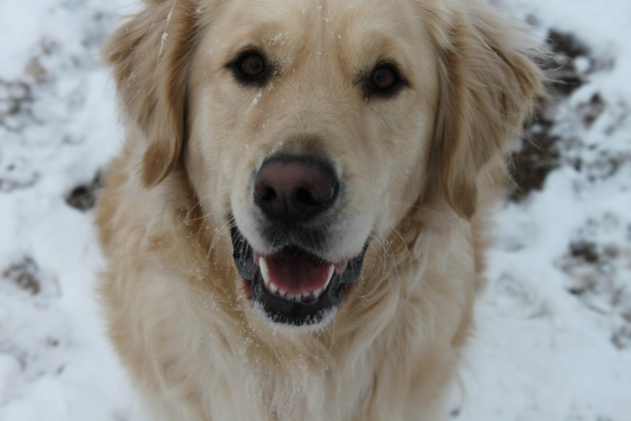 Many pets were excited at the chance to play in the snow.