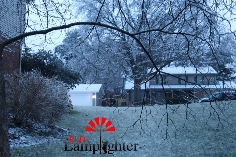 Trees all over Lexington are falling and having branches break off due to the layers of ice that covered them.