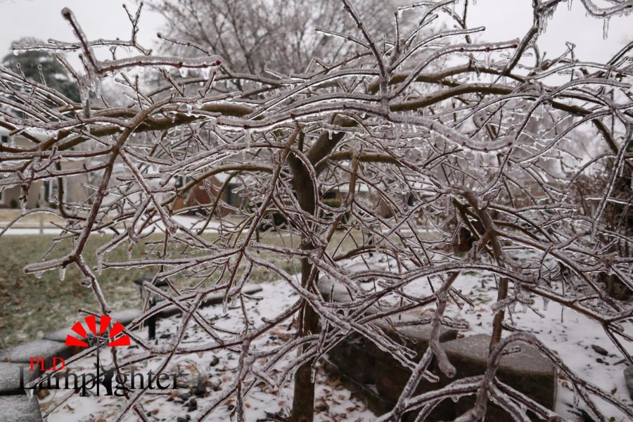 The ice has frozen over all trees making them very brittle. This has caused tree branches to fall, potentially being harmful.